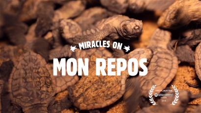 Miracles on Mon Repos