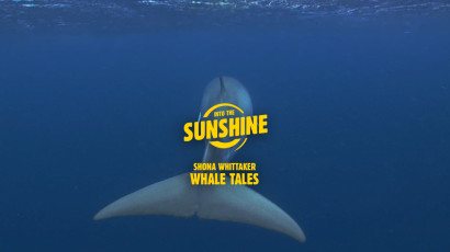 Whale Tales